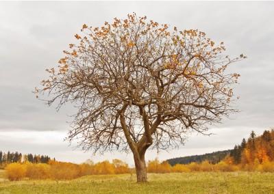 Herbst in der Bioschule Schlägl