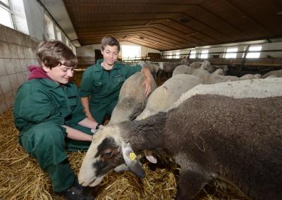 Praxis Viehwirtschaft